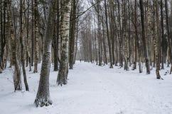 Vicolo di inverno Fotografia Stock Libera da Diritti