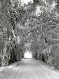 Vicolo di inverno con gli alberi innevati Fotografie Stock