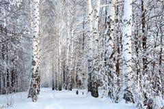 Vicolo di legni di betulla di inverno fotografie stock libere da diritti