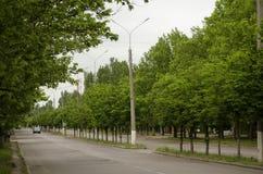 Vicolo di verde di Goroskaya Viale della primavera immagine stock