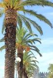 Vicolo e fortificazione della palma Immagine Stock Libera da Diritti