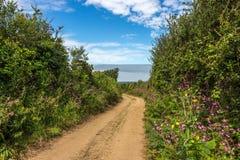 Vicolo e siepi di arbusti del paese nella campagna, Cornovaglia, Regno Unito immagine stock libera da diritti