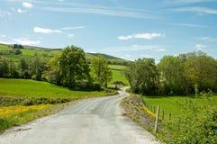 Vicolo ed alberi del paese di estate nella campagna britannica Fotografia Stock Libera da Diritti
