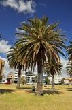 Vicolo i della palma Fotografia Stock