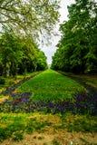 Vicolo lungo con gli alberi verdi, erba e tulipani e fiori di fioritura del nontiscordardime nel parco di Cismigiu, Bucarest, Rom immagini stock
