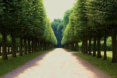 Vicolo magico allineato con i bei alberi Fotografia Stock