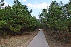 Vicolo negli alberi Fotografia Stock Libera da Diritti