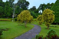 Vicolo nei giardini botanici reali, Kandy La Sri Lanka Immagine Stock Libera da Diritti