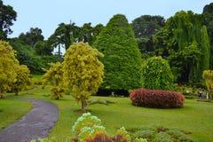 Vicolo nei giardini botanici reali, Kandy La Sri Lanka Fotografia Stock