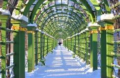 Vicolo nel giardino di estate in StPetersburg Fotografie Stock