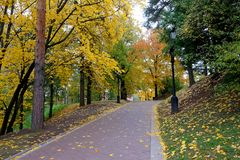 Vicolo nel parco in autunno Fotografie Stock Libere da Diritti