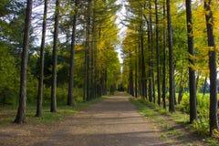 Vicolo nel parco di autunno Fotografia Stock
