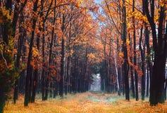 Vicolo nel parco di autunno Fotografia Stock Libera da Diritti