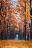 Vicolo nel parco di autunno Immagini Stock