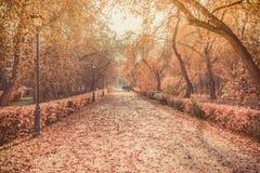 Vicolo nel parco di autunno dell'oro Fotografia Stock Libera da Diritti