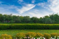 Vicolo nel parco di estate Immagini Stock Libere da Diritti
