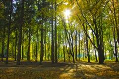 Vicolo nel parco soleggiato di autunno Immagini Stock Libere da Diritti