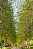 Vicolo nel tempo di primavera Fotografie Stock Libere da Diritti