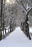 Vicolo nella neve con splendere del sole Fotografia Stock