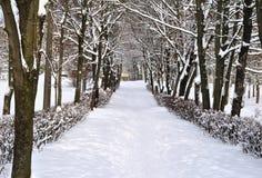 Vicolo nella neve nell'inverno Fotografia Stock
