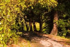Vicolo ombreggiato nell'arboreto di Soci, Russia Immagini Stock Libere da Diritti