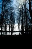 Vicolo scuro dell'albero fotografia stock libera da diritti