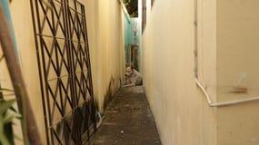 Vicolo stretto d'annata fra le pareti con il cane che si siede nel mezzo Fotografia Stock Libera da Diritti