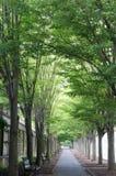 Vicolo verde Immagini Stock
