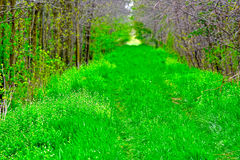 Vicolo verde Fotografie Stock Libere da Diritti