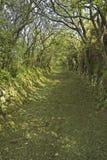 Vicolo verde del paese Fotografie Stock