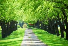 Vicolo verde dell'albero Fotografie Stock Libere da Diritti