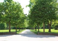 Vicolo verde nel parco a Stuttgart Immagini Stock Libere da Diritti