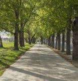 Vicolo verde a Novosibirsk immagine stock libera da diritti