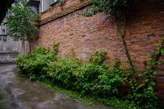 Vicolo verdeggiante fuori della parete anni '60 dopo la pioggia di estate Immagine Stock