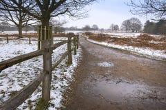 Vicolo vuoto nel parco di Richmond un giorno di inverno Recinto di legno ed alberi maestosi immagini stock libere da diritti