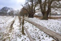 Vicolo vuoto nel parco Recinto di legno ed alberi maestosi in Richmond Park fotografia stock libera da diritti