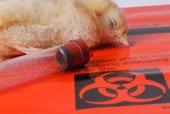 Victime de grippe d'oiseau Images libres de droits