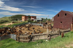Victor Colorado Cattle Yards stock images