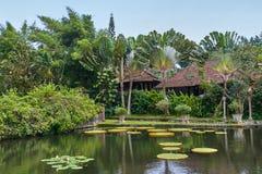 Victoria Amazonica Giant Water Lilies stock fotografie