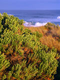 Victoria Australia Coast Landscape Royalty Free Stock Photography