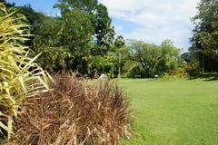 Victoria Botanical Gardens (Mont Fleuri Botanical Gardens Seychelles) Fotos de archivo libres de regalías