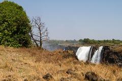 Victoria Falls & árvores, África do Sul - 11/2013 Foto de Stock Royalty Free