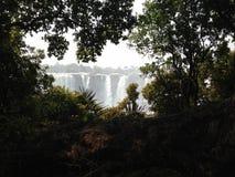 Victoria Falls που βλέπει μέσω του τροπικού δάσους Στοκ Εικόνες