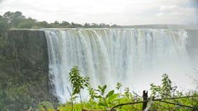 Victoria Falls High Flow almacen de video