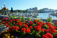 Victoria harbour. Victoria,Canada-Juli 1 2015: picture of the harbour Stock Images