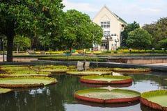 Victoria-lelies in Park. Royalty-vrije Stock Afbeeldingen