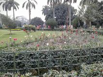 Victoria memorial beautiful rose garden. Nice place to spend a day Royalty Free Stock Photography