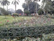 Victoria minnes- härlig rosträdgård royaltyfri fotografi