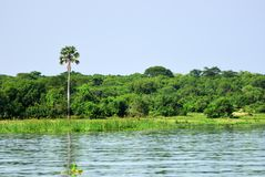 Victoria Nile river, Uganda, Africa. The marshy bank of the Victoria Nile river in Uganda, Africa Stock Images