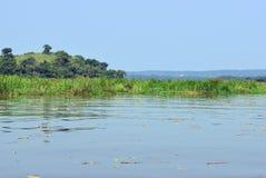 Victoria Nile river, Uganda, Africa. The marshy bank of the Victoria Nile river in Uganda, Africa Stock Photos